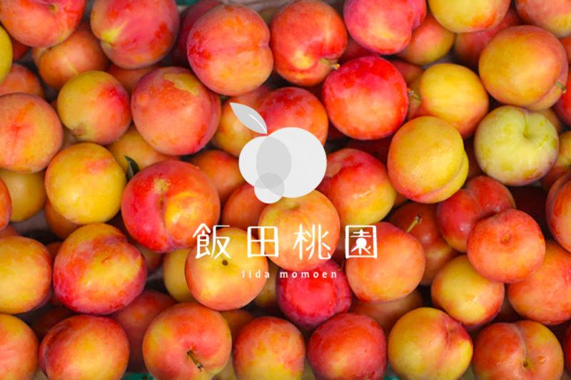 """【香川】古くからお遍路さんの喉を潤してきた桃『飯田桃園』 –  [Kagawa] Plum and Peach orchard """"Īda Peach Farm"""""""