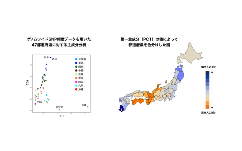 東京大学大学院理学系研究科ヒトゲノム多様性研究室