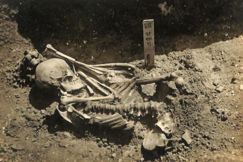 【岡山 国史跡】世界最古のサメに襲われた人骨、津雲貝塚で発見。3000年前の瀬戸内で - [Okayama] 3,000-year-old shark in Setouchi attack victim found