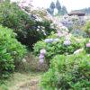 【愛媛・6/24(日)】約2万株のあじさい!四国の山里 「あじさいの里」 - The Hydrangea Village at Shikoku